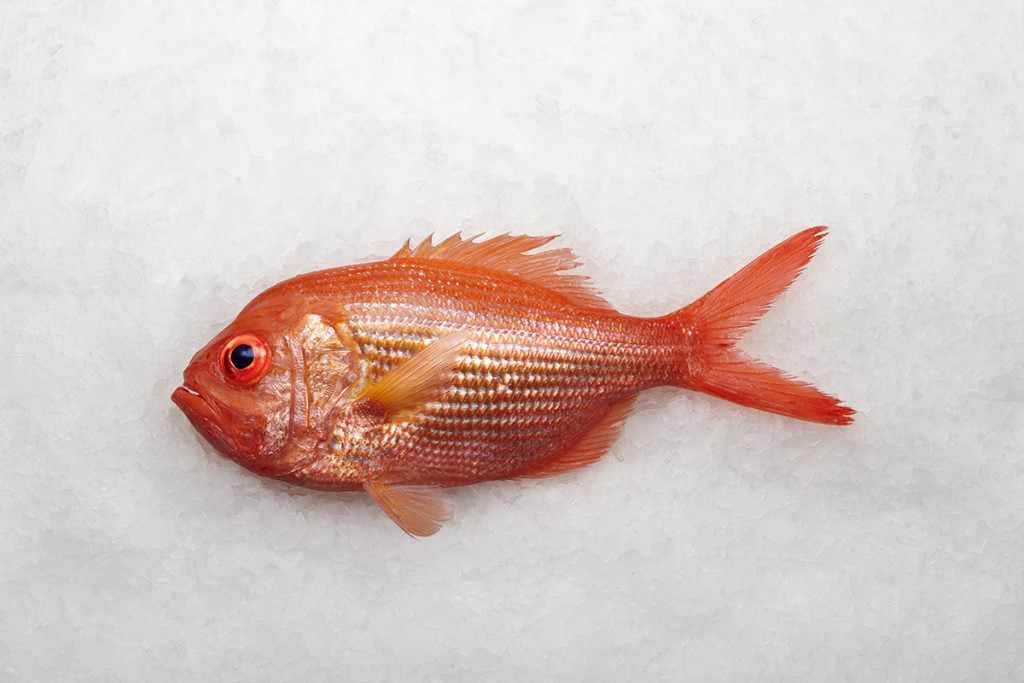 Red-Snapper-Whole 2.jpg
