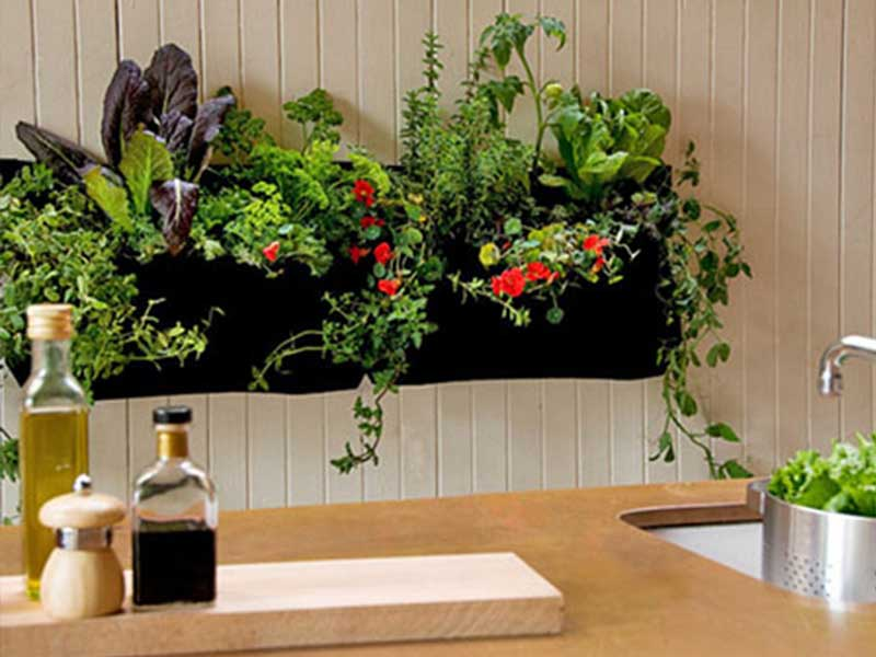 Where can i buy indoor gardening supplies hong kong moms for Indoor gardening machine