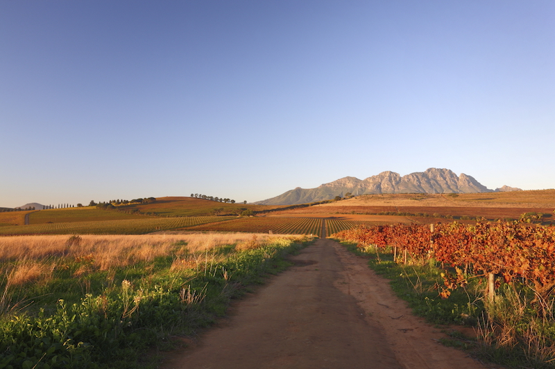 3-winelands